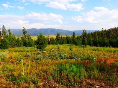 Butte Residential Lots & Land For Sale: Lowland Road Tract C