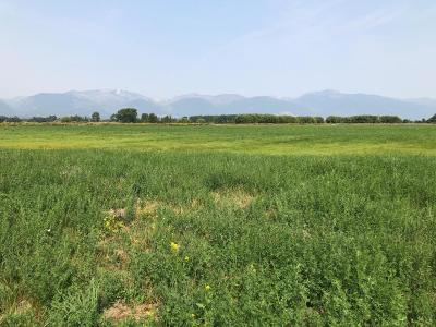 Ravalli County Residential Lots & Land For Sale: Nhn Eastside Hwy