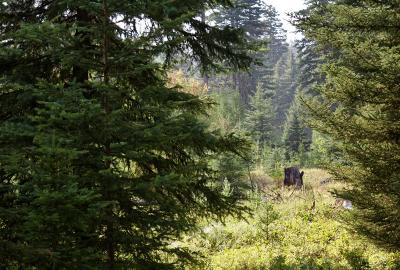 Lincoln County Residential Lots & Land Under Contract Taking Back-Up : Lot #14 Koocanusa Trail