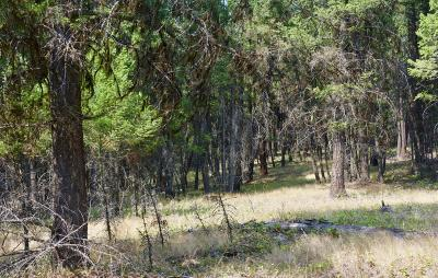 Lincoln County Residential Lots & Land For Sale: Nhn Highway 93