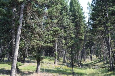 Seeley Lake Residential Lots & Land For Sale: Nhn Alpine Trails