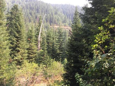 Alberton, Saint Regis, Huson, Heron, Noxon, Paradise, Superior, Thompson Falls, Trout Creek Residential Lots & Land For Sale: Pilgrim Creek Road