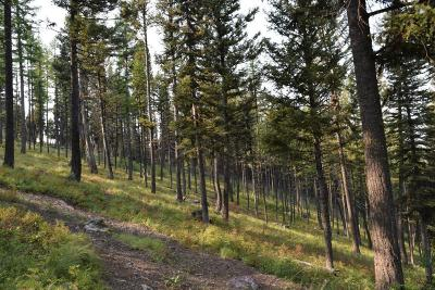 Seeley Lake Residential Lots & Land For Sale: Lot 21 Elkhorn Road