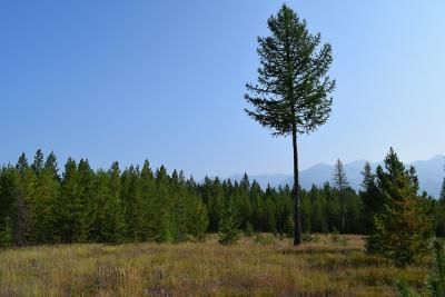 Missoula County Residential Lots & Land For Sale: 1034 Stoner Lake Road