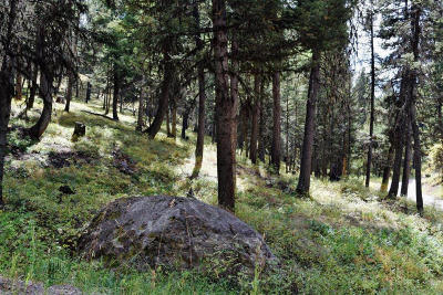 Seely Lake, Seeley Lake Residential Lots & Land For Sale: 240 Wolverine Drive