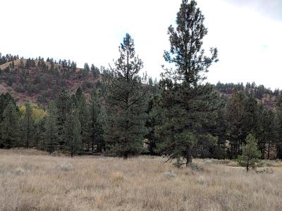 Corvallis Residential Lots & Land For Sale: 946 Fox Raven Hollow