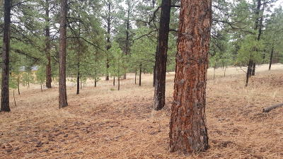 Ravalli County Residential Lots & Land For Sale: Nhn Merwin Trail
