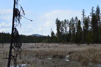 Flathead County Residential Lots & Land For Sale: Nhn Highway 93 South
