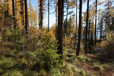 Flathead County Residential Lots & Land For Sale: 269 Elk Highlands Drive