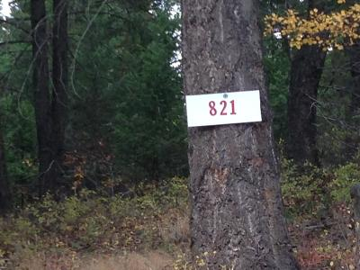 Columbia Falls Residential Lots & Land For Sale: 821 Tamarack Lane