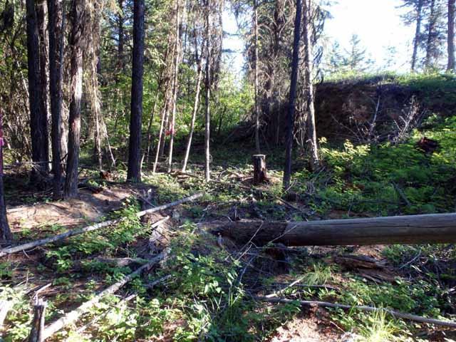 Sec  8 Roberts Creek Road, Fortine, MT | MLS# 21813289 | Montana