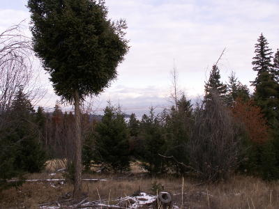 Flathead County Residential Lots & Land For Sale: 1075 High Point Lane