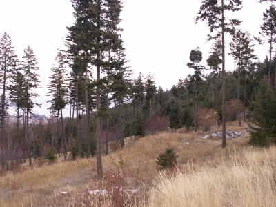 Flathead County Residential Lots & Land For Sale: 1039 High Point Lane