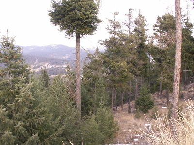 Flathead County Residential Lots & Land For Sale: 167 Eagle Crest Road