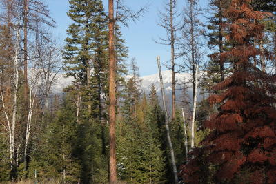Whitefish Residential Lots & Land Under Contract Taking Back-Up : 20 Merganser Court
