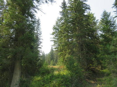 Whitefish Residential Lots & Land Under Contract Taking Back-Up : 300 Stonecrop Lane