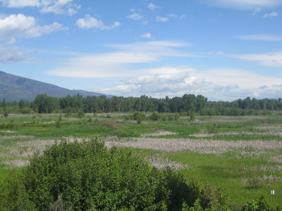 Stevensville Residential Lots & Land For Sale: 5191 Hw 203