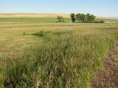 Fort Shaw, Simms, Sun River, Augusta, Brady, Conrad, Dupuyer, Valier, Bynum, Choteau, Dutton, Fairfield, Power Residential Lots & Land For Sale: Highway 408