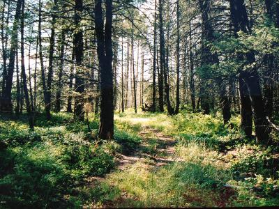 Whitefish Residential Lots & Land For Sale: 880 Bowdish Road