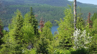 Lake County Residential Lots & Land For Sale: Nhn Tranquil Way