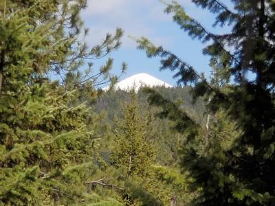Alberton, Saint Regis, Huson, Heron, Noxon, Paradise, Superior, Thompson Falls, Trout Creek Residential Lots & Land For Sale: Nhn 9 Mile Road