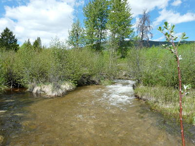 Dell, Anaconda, Wise River, Butte Single Family Home For Sale: 560 Beaver Pond Trail