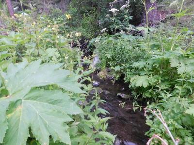 Cascade Residential Lots & Land For Sale: Hideaway Lane Lane