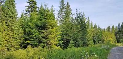 Flathead County Residential Lots & Land For Sale: 235-245 Chinook Lake Road