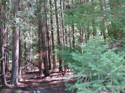 Lincoln County Residential Lots & Land For Sale: 276 Bethel Drive