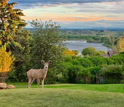 Great Falls, Black Eagle, Belt, Ulm Single Family Home For Sale: 45 Prospect Drive