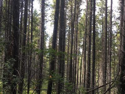 East Glacier Park Residential Lots & Land Under Contract Taking Back-Up : 34 Big Springs Trail
