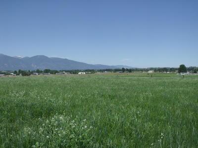 Stevensville Residential Lots & Land For Sale: Nhn Ambrose Creek Road