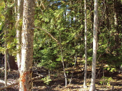 Lincoln County Residential Lots & Land For Sale: Nhn Swanson Loop