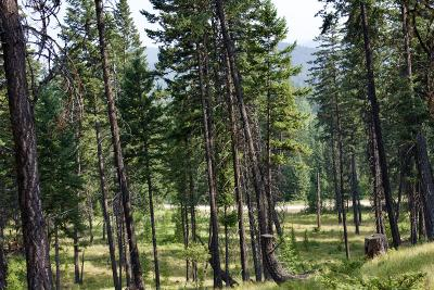 Lincoln County Residential Lots & Land For Sale: Nhn Meadow Creek Road