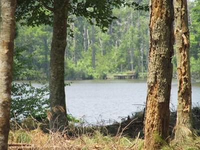 Perquimans County Land/Farm For Sale: Lot 29 Carolyn Court