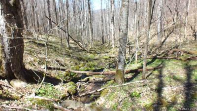 Hot Springs NC Residential Lots & Land For Sale: $85,000