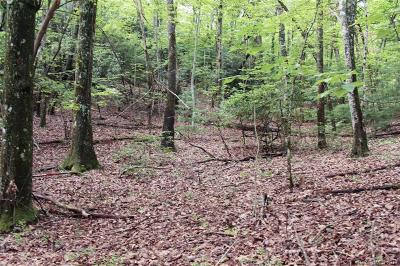Buncombe County, Haywood County, Henderson County, Jackson County, Madison County, Polk County, Rutherford County, Transylvania County Residential Lots & Land For Sale: 5 Walnut Ridge Road