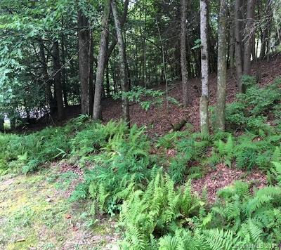 Brevard Residential Lots & Land For Sale: 864 Deerlake Road