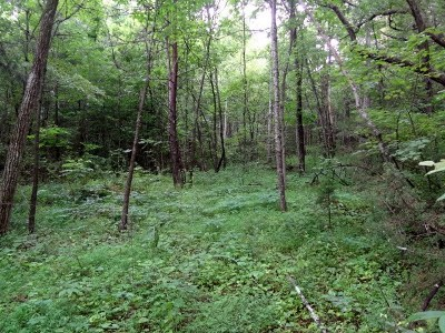 Residential Lots & Land For Sale: 00 Sugarfork Church Road