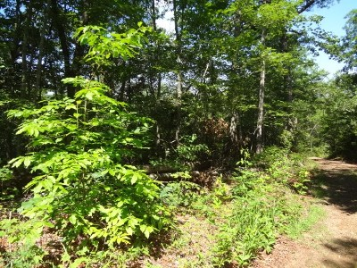 Franklin Residential Lots & Land For Sale: 00 Hummingbird Hill Road
