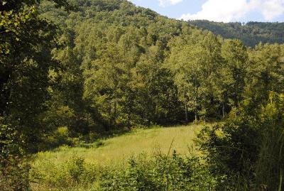 Residential Lots & Land For Sale: Lakey Creek Rd