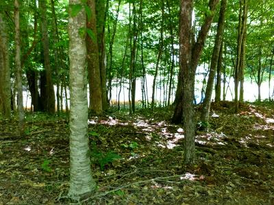 Franklin, Otto Residential Lots & Land For Sale: Lot 8 Piper Lane