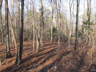Franklin, Otto Residential Lots & Land For Sale: 00 Shady Top