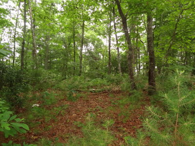 Franklin Residential Lots & Land For Sale: 00 Forest Oak Road