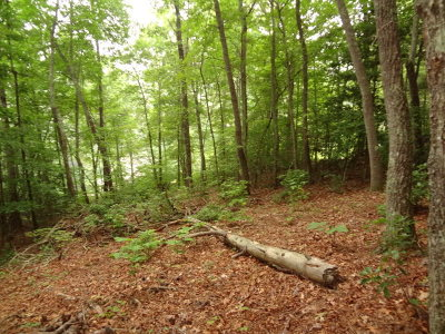 Macon County Residential Lots & Land For Sale: 00 Springbrook Drive