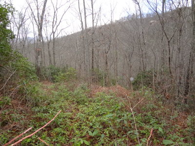 Macon County Residential Lots & Land For Sale: 00 Spring Mountain Circle