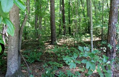 Franklin, Otto Residential Lots & Land For Sale: 00 Forest Cove