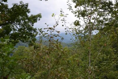 Franklin, Otto Residential Lots & Land For Sale: Silvercrest Rd