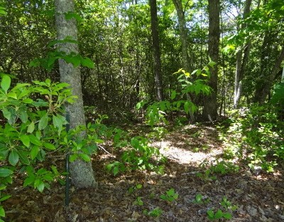 Macon County Residential Lots & Land For Sale: 00 Willow Cove Road