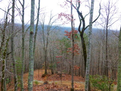 Franklin Single Family Home For Sale: 105 Talley Mountain Lane